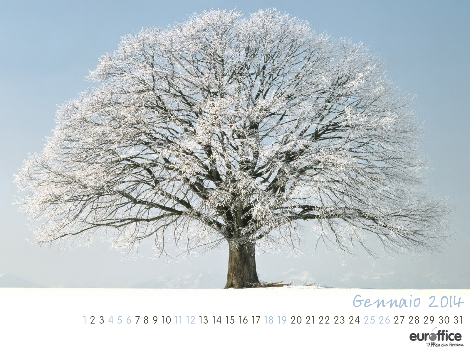 Wallpaper gennaio 2014 - Albero innevato